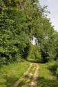 #9: Main road in Inyushinskiy wood