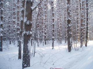 #1: winter forest near the confluence
