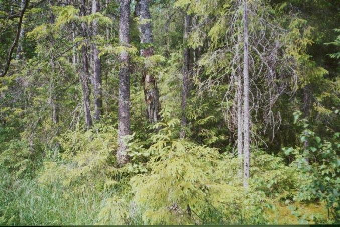 North view at the CP - mature forest
