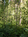 #2: Лес вокруг точки 57°N 47°E/Forest around the confluence