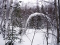 #4: Winter scenery