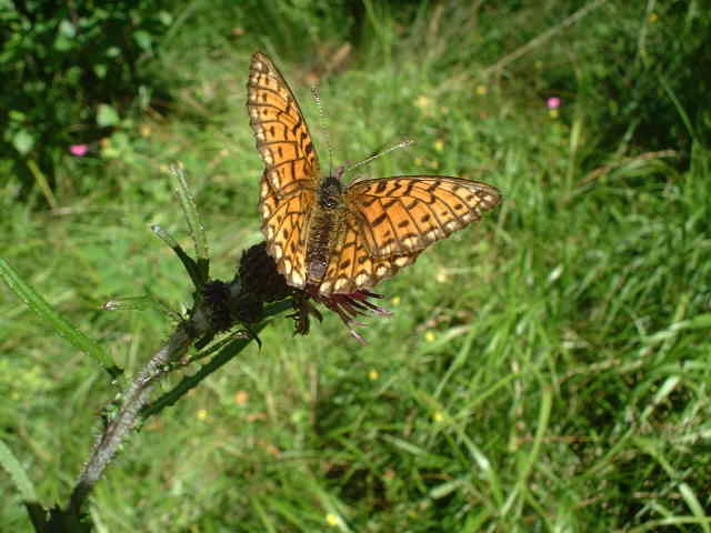 Butterfly who accompanied me through the forest