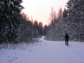 #8: Early morning. Making ski-track/Тропежка на рассвете