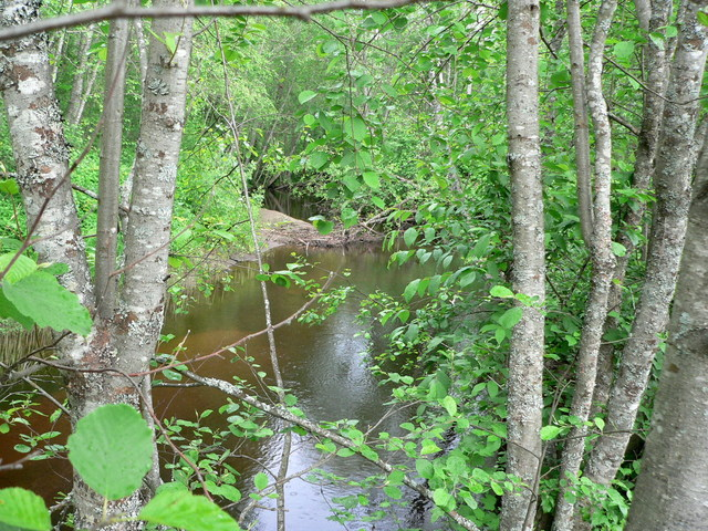 The confluent brook