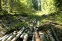 #11: Logging path / Просека