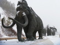 #7: Мammoths
