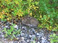 #7: The hare at the road side