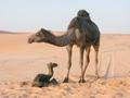 #6: A new born in the middle of the desert.