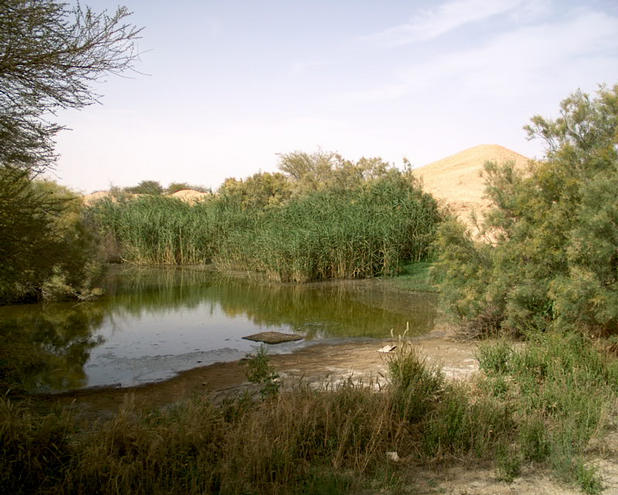 Water ponds at the farming area