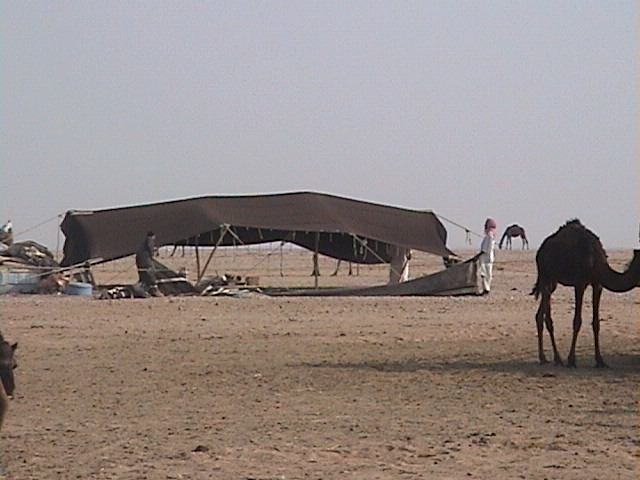 The traditional Bedouin tent, made out of sheep wool.