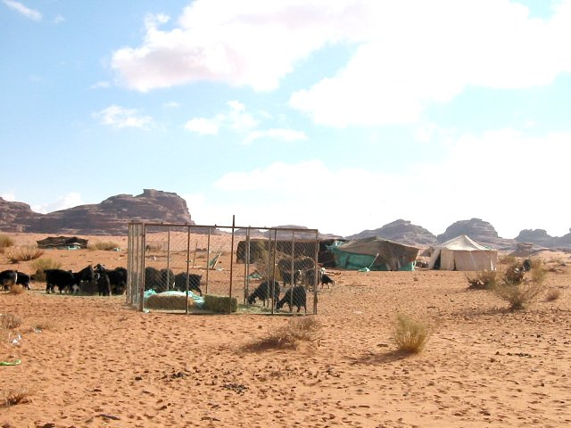 Small Bedouin camp
