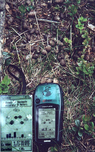 The GPS at a pile of moose droppings near the confluence.