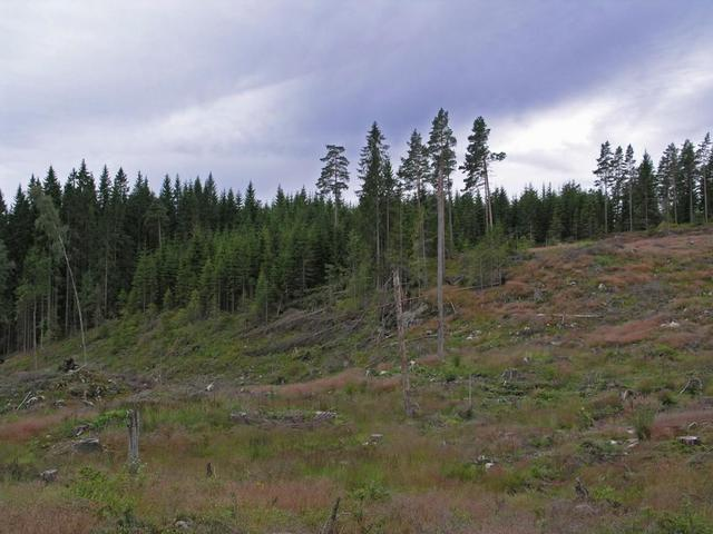 Clear-cut  logging area
