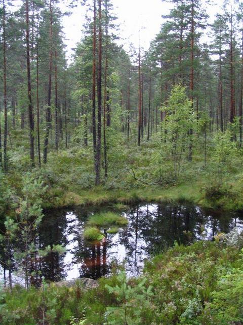 original swedish swamp