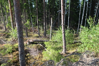 #1: Looking North