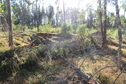 #4: Looking W (and here are the hallon)