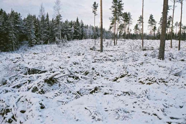 The border between the clear-felled area and the wood, in direction W.