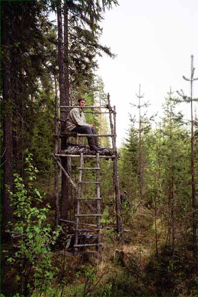 Daniel sitting in a moose-hunting tower, looking for rival confluence hunters.