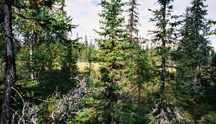 View to the north. The bog is visible behind the trees.