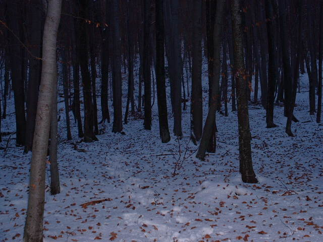 Snowy forest near Tihaboj