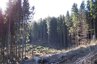 #1: General view of the confluence (towards W)