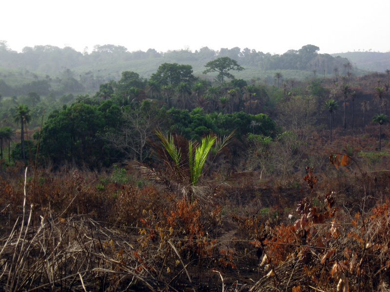 Undulating hills and remnant woodlands typical of northern Sierra Leone