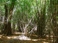 #10: High bamboo forest