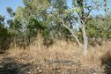 #4: Bush and black coal spot from bushfire to the West