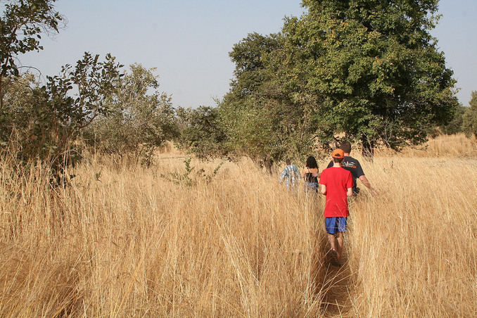We walked through tall Andropogon grass to reach the site