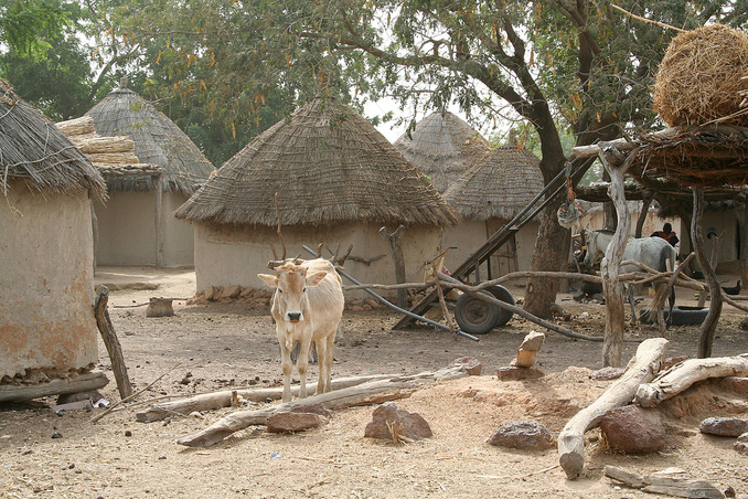 One of many widely scattered Peul (Fulani) villages in the pastoral zone
