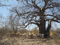 #14: Occasional baobab trees provided the only shade around