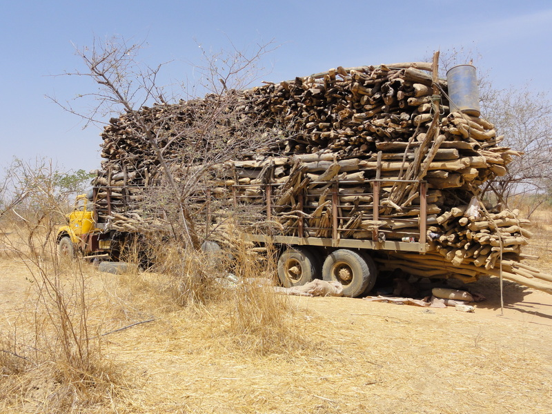 Wood harvesters overloaded truck