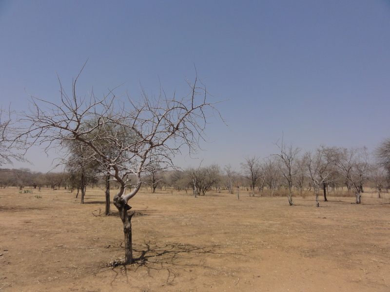 Local landscape in Dafra
