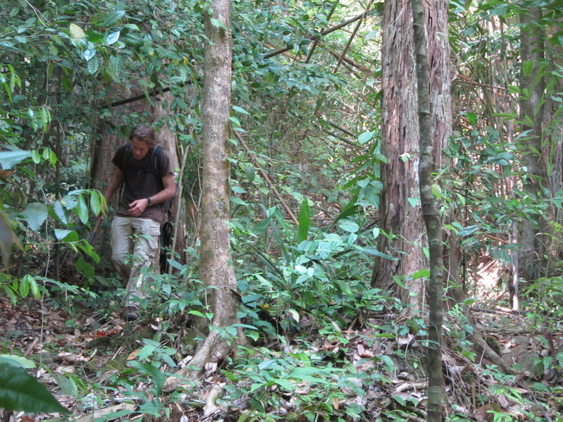 Greg, hacking through the jungle with machete.