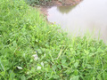 #7: GPS at measured position; confluence is 4-5 m to the right, in the water