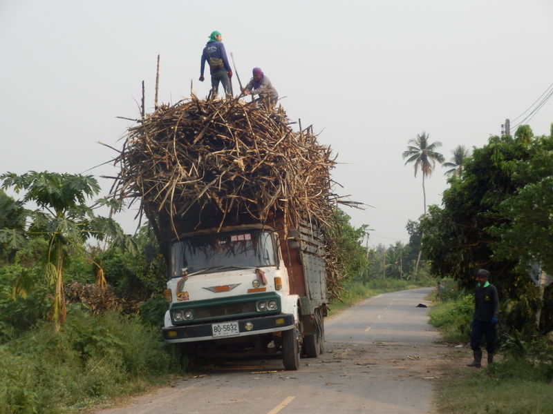 Truck Getting Packed with Sugar Cane