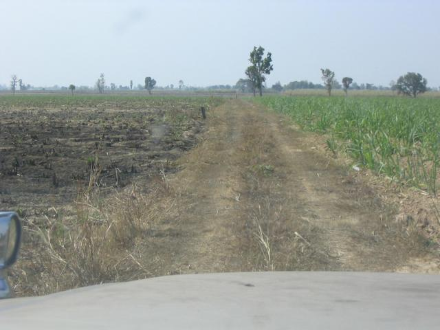 Road through sugarcane fields