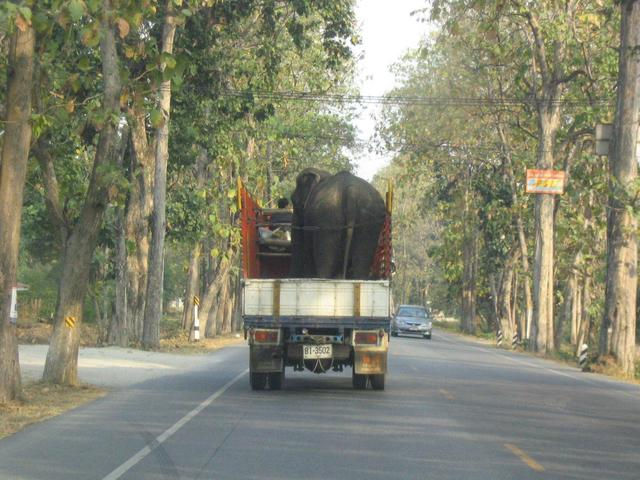 Unusual traffic encountered on road