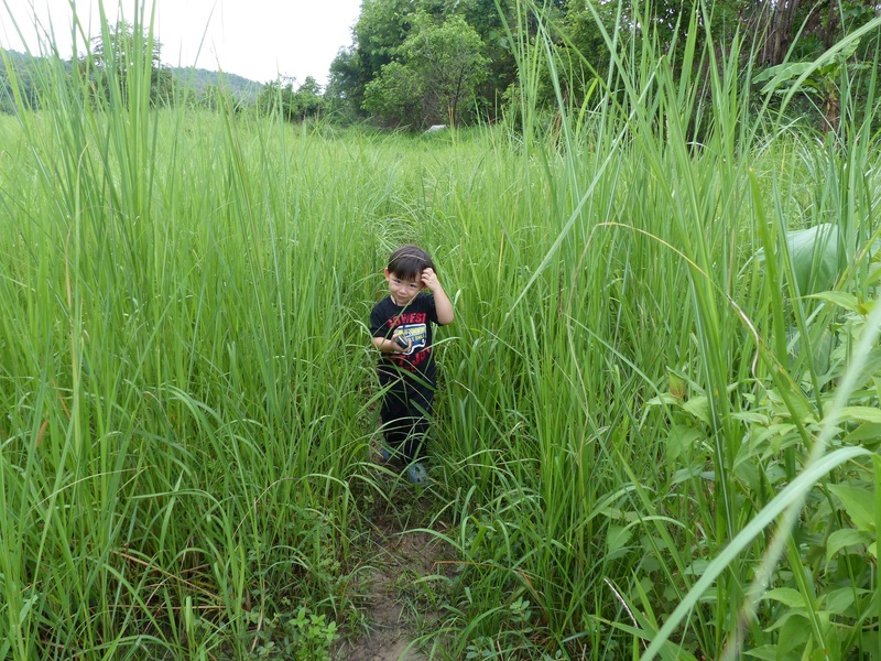 Andy in the tall grass.
