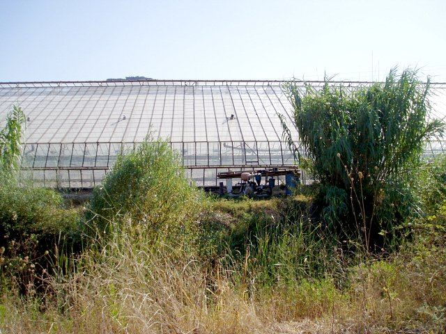 West, looking towards the glasshouse