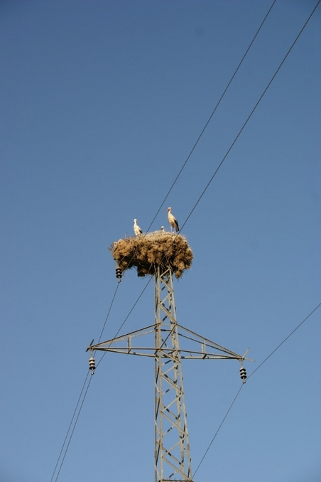 Bird nest on a pylon, on the road coming back from the CP