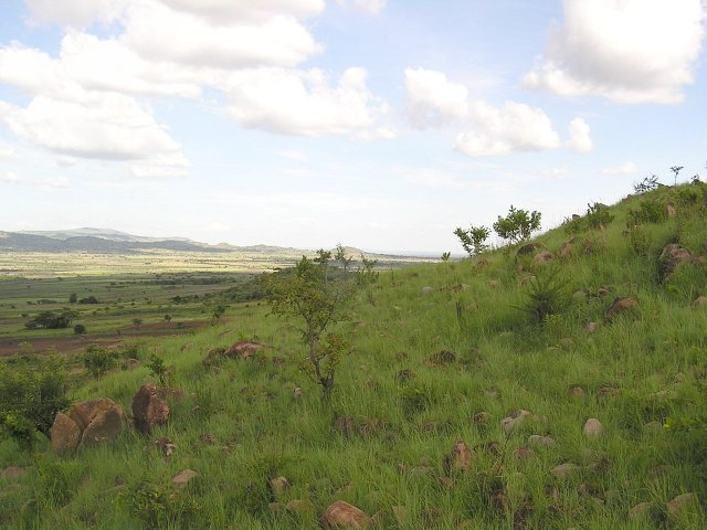 The view of 2S 34E, just north of the Serengeti's Western corridor