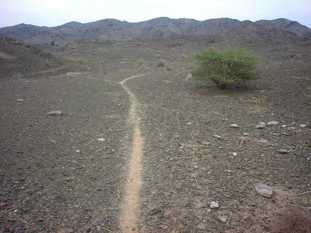 Animal track and bush nearby the Confluence