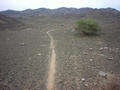#3: Animal track and bush nearby the Confluence