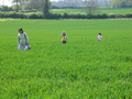#7: Walking in the fields