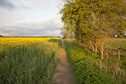 #7: Looking back along the footpath