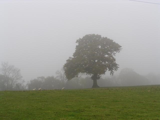 The oak tree in the gloom