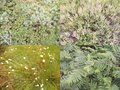 #11: ground cover: moss, heather, bog cotton, ferns