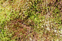 #7: Ground cover