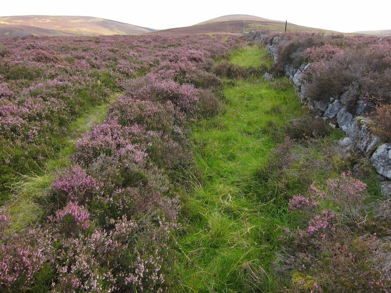 Heather lined track leading up from Allt Dowrie